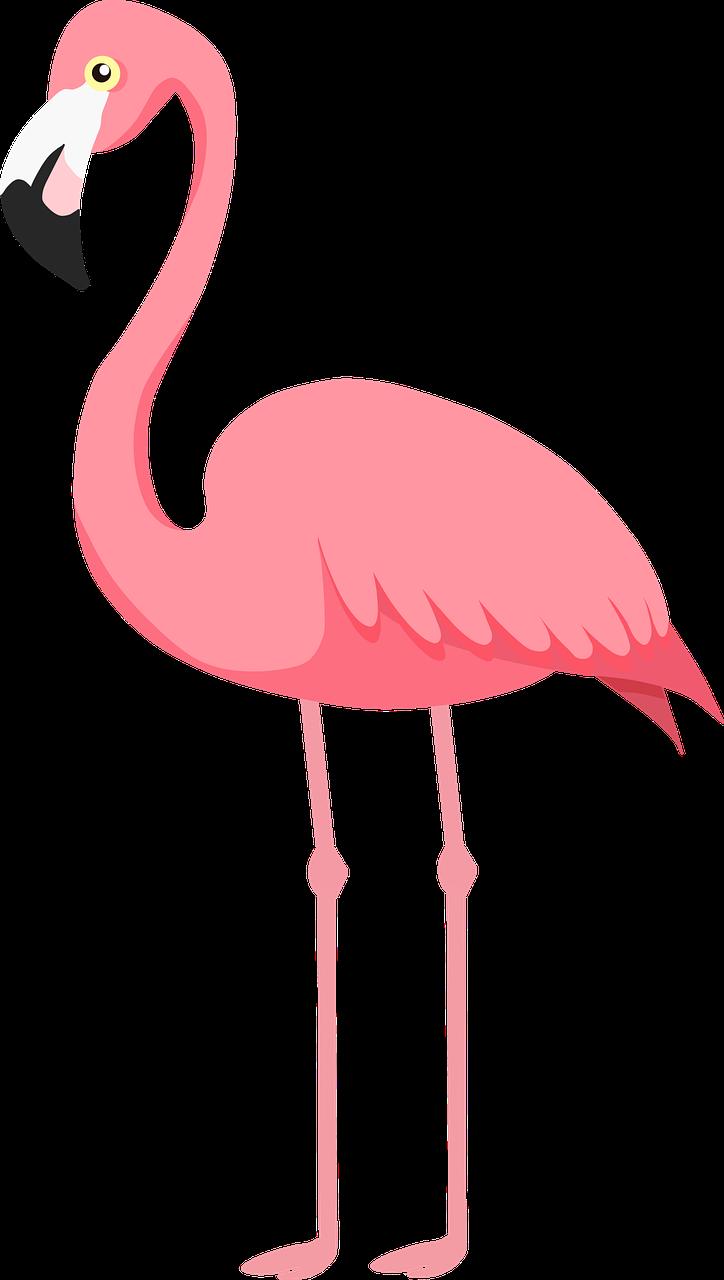 flamingo-5121459_1280